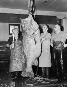 1940's . Huge bass caught in Cook strait http://natlib.govt.nz/records/23014474